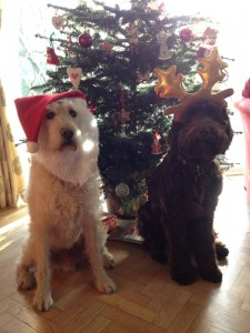 The dogs get festive for Christmas.